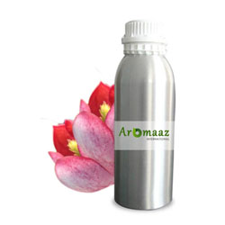 Red Champaca Floral Absolute Oil